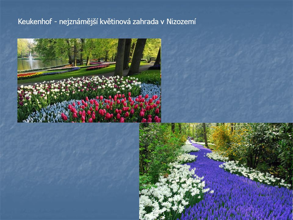 Keukenhof - nejznámější květinová zahrada v Nizozemí