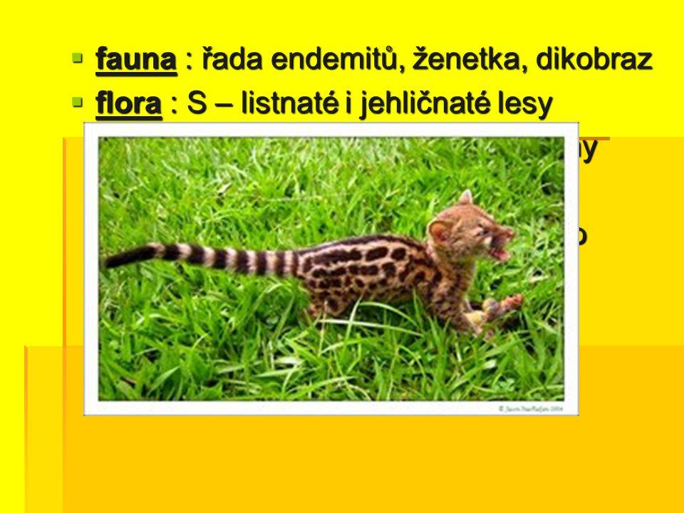 fauna : řada endemitů, ženetka, dikobraz