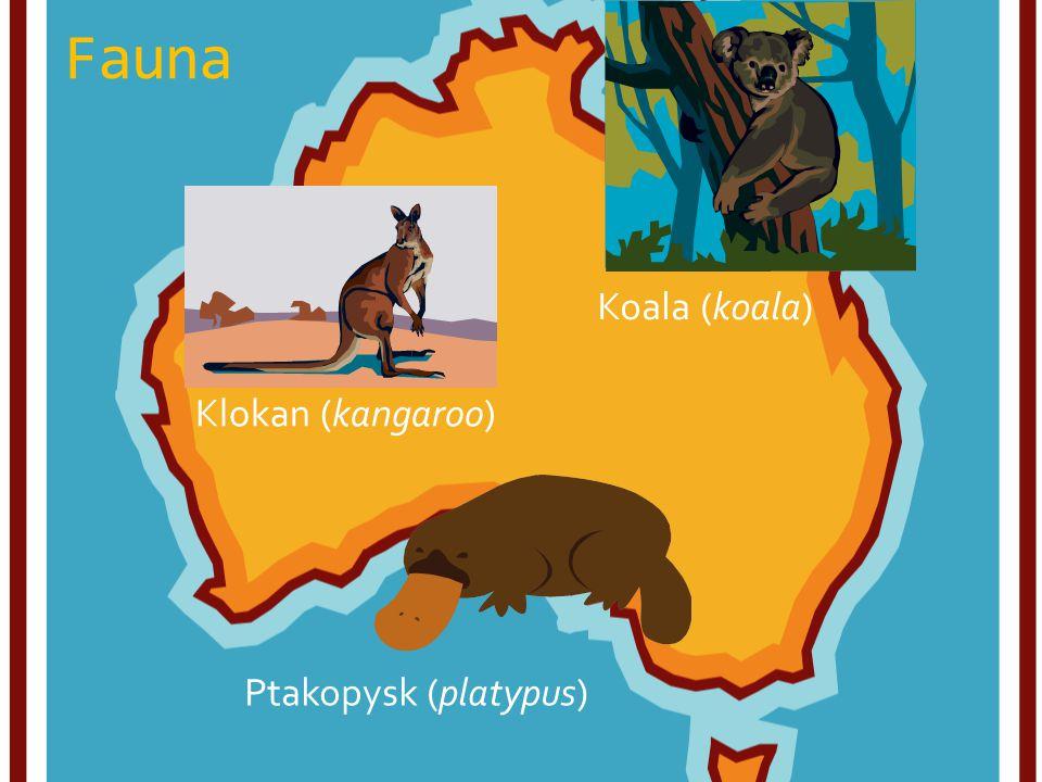 Fauna Koala (koala) Klokan (kangaroo) Ptakopysk (platypus)