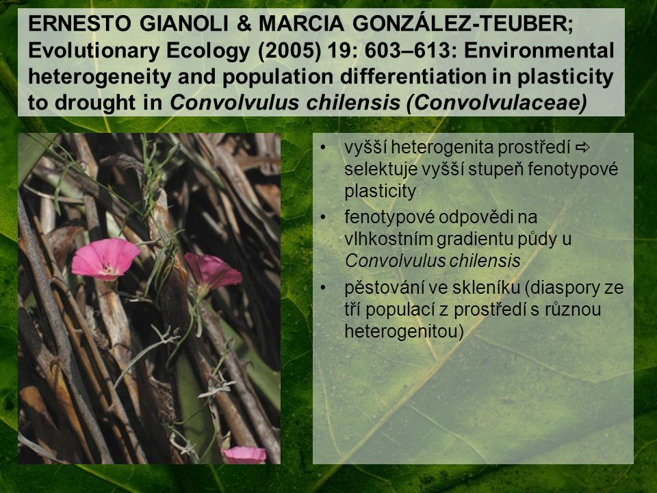 ERNESTO GIANOLI & MARCIA GONZÁLEZ-TEUBER; Evolutionary Ecology (2005) 19: 603–613: Environmental heterogeneity and population differentiation in plasticity to drought in Convolvulus chilensis (Convolvulaceae)