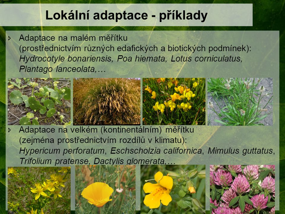 Lokální adaptace - příklady