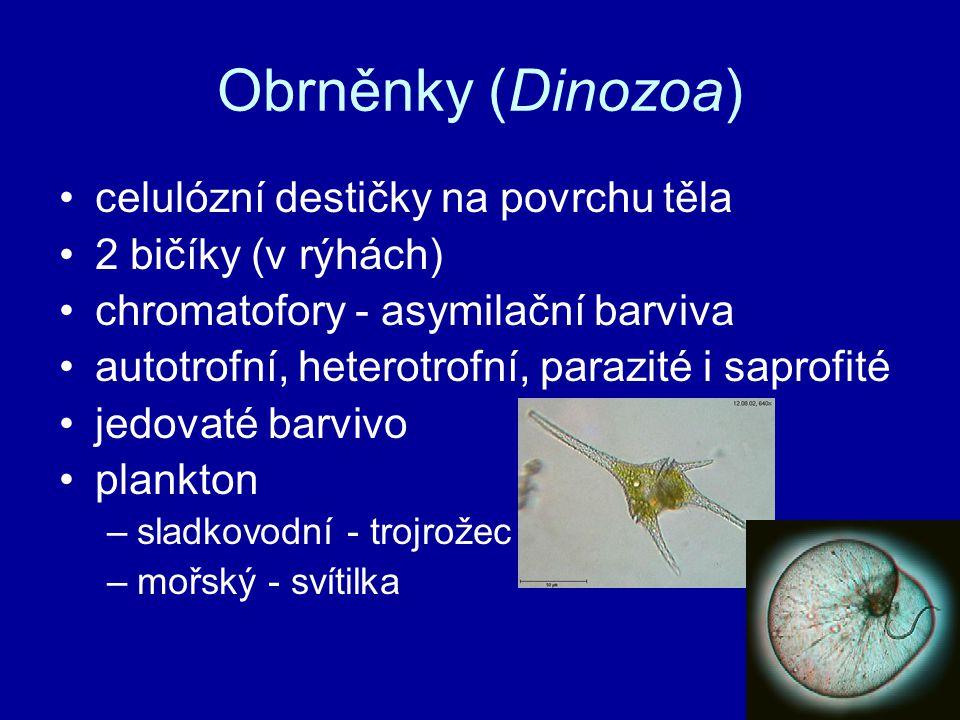 Obrněnky (Dinozoa) celulózní destičky na povrchu těla