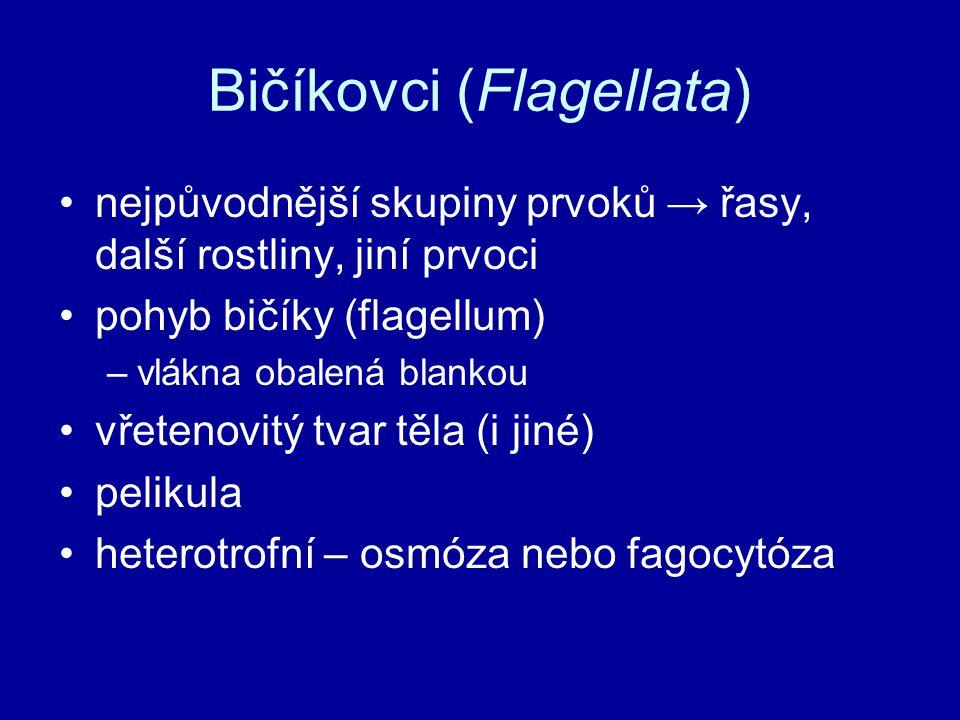 Bičíkovci (Flagellata)