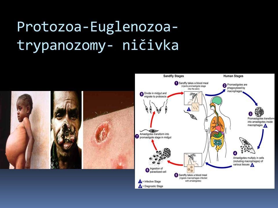 Protozoa-Euglenozoa-trypanozomy- ničivka