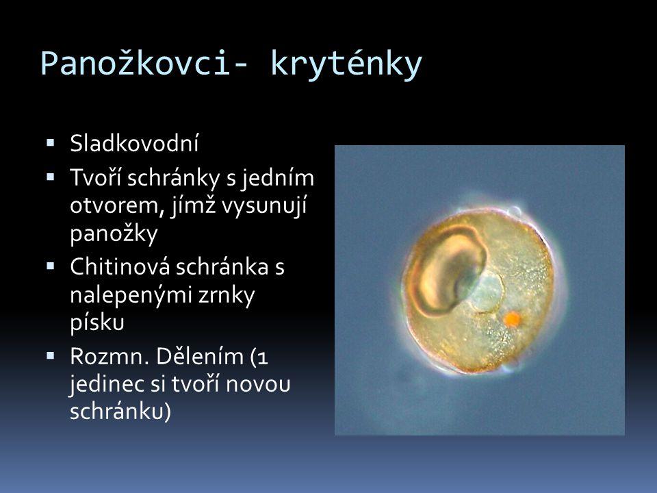 Panožkovci- kryténky Sladkovodní