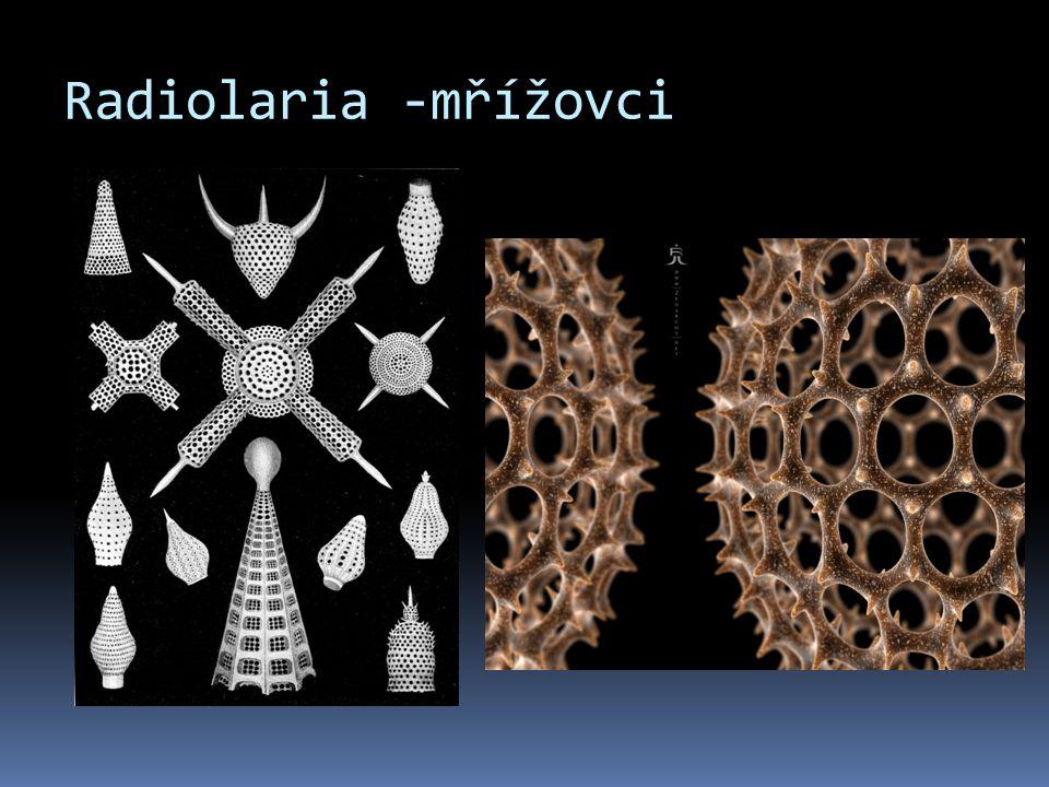 Radiolaria -mřížovci