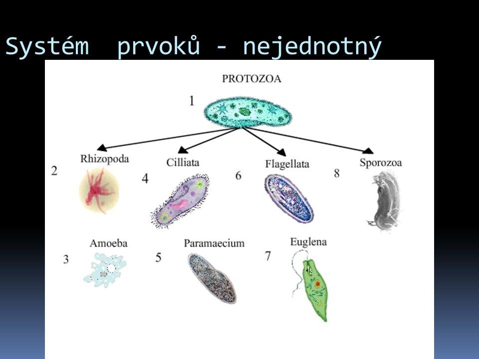 Systém prvoků - nejednotný