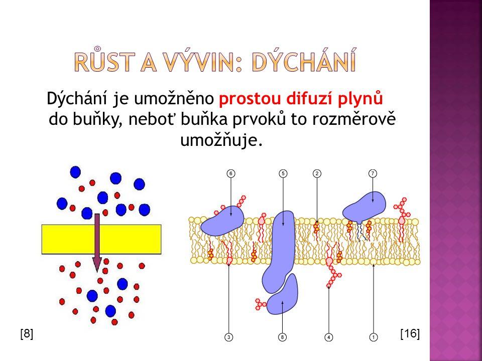 Růst a vývin: dýchání Dýchání je umožněno prostou difuzí plynů do buňky, neboť buňka prvoků to rozměrově umožňuje.