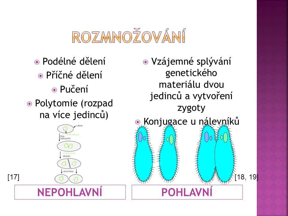Polytomie (rozpad na více jedinců)