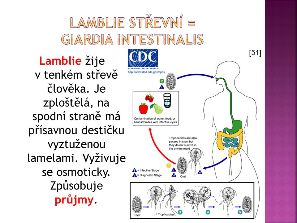 Lamblie střevní = Giardia intestinalis