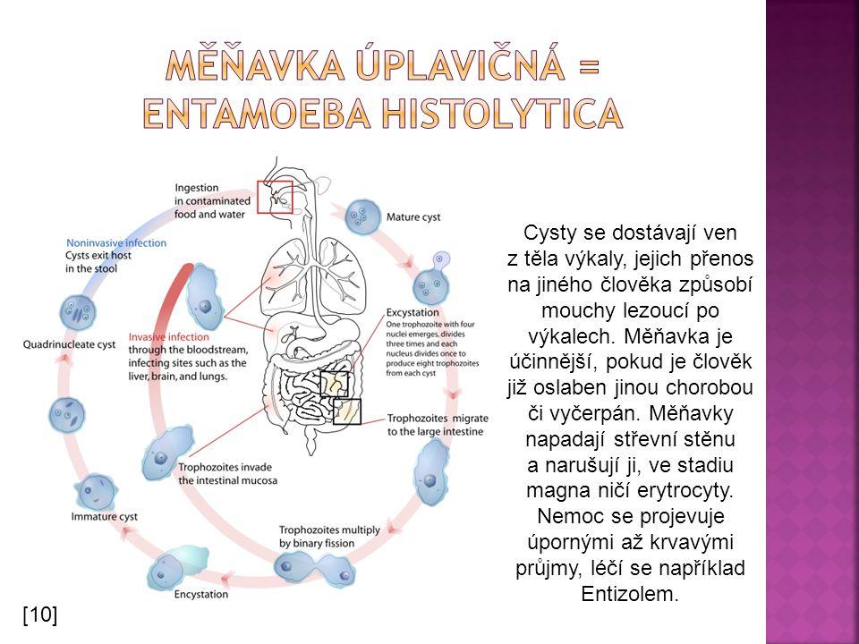 Měňavka úplavičná = entamoeba histolytica