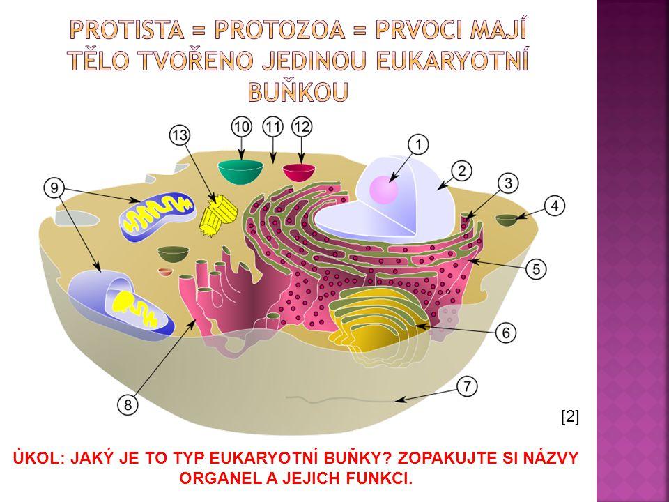 Protista = protozoa = prvoci mají tělo tvořeno jedinou eukaryotní buňkou