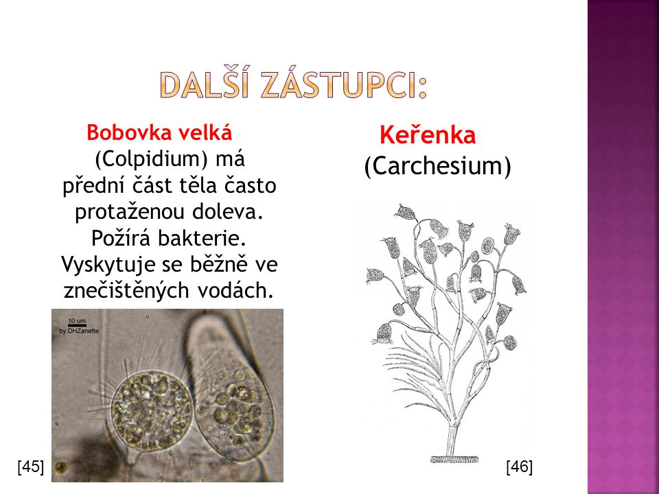 Další Zástupci: Keřenka (Carchesium)