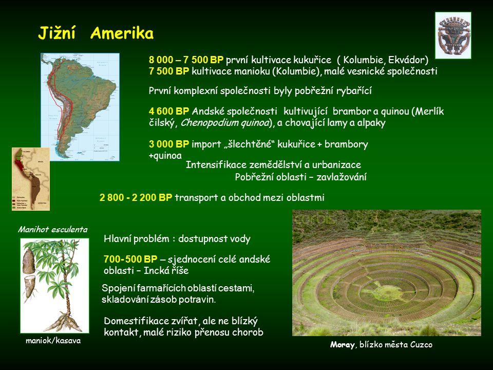 Jižní Amerika 8 000 – 7 500 BP první kultivace kukuřice ( Kolumbie, Ekvádor) 7 500 BP kultivace manioku (Kolumbie), malé vesnické společnosti.