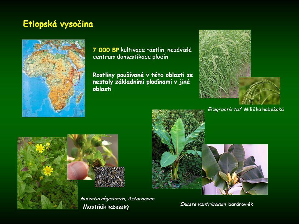 Etiopská vysočina 7 000 BP kultivace rostlin, nezávislé centrum domestikace plodin.