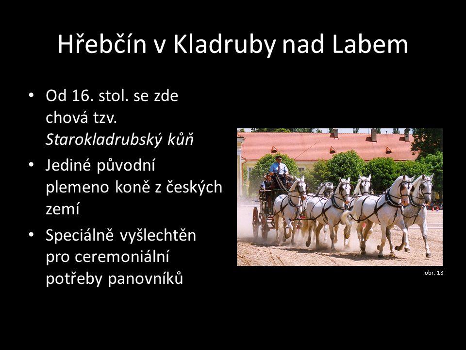 Hřebčín v Kladruby nad Labem