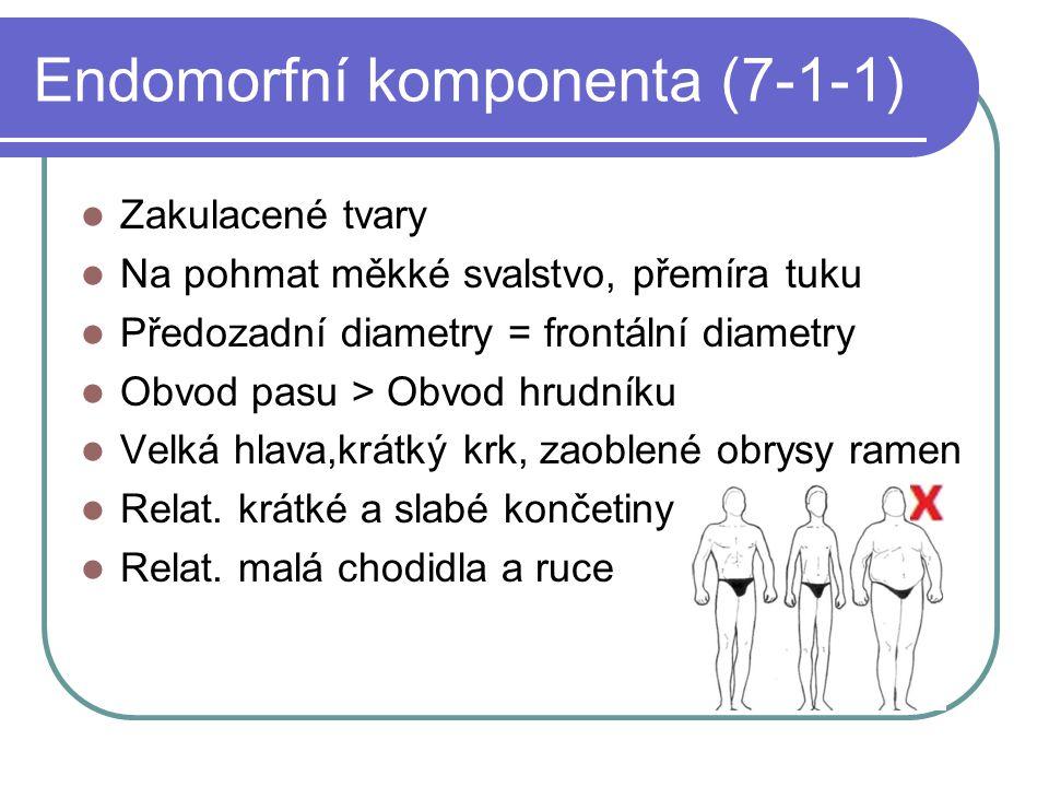 Endomorfní komponenta (7-1-1)