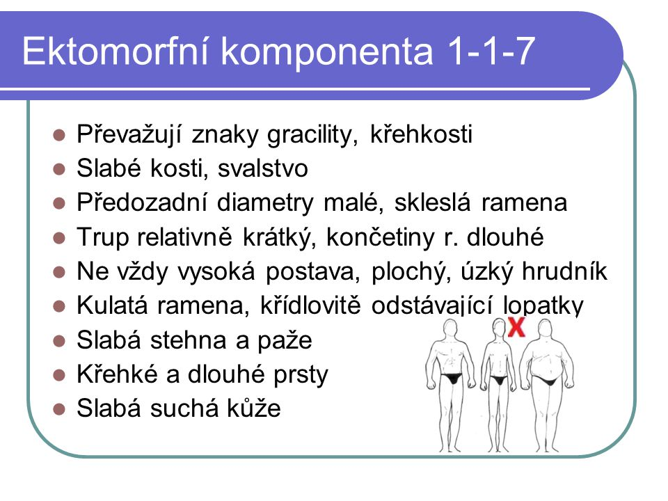 Ektomorfní komponenta 1-1-7
