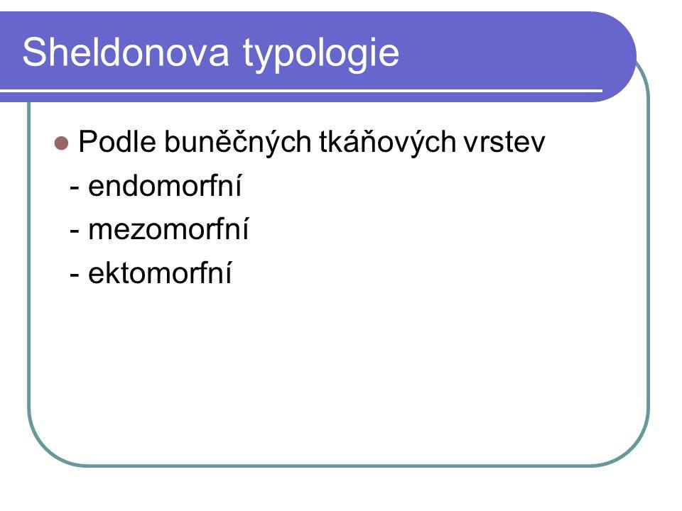Sheldonova typologie Podle buněčných tkáňových vrstev - endomorfní