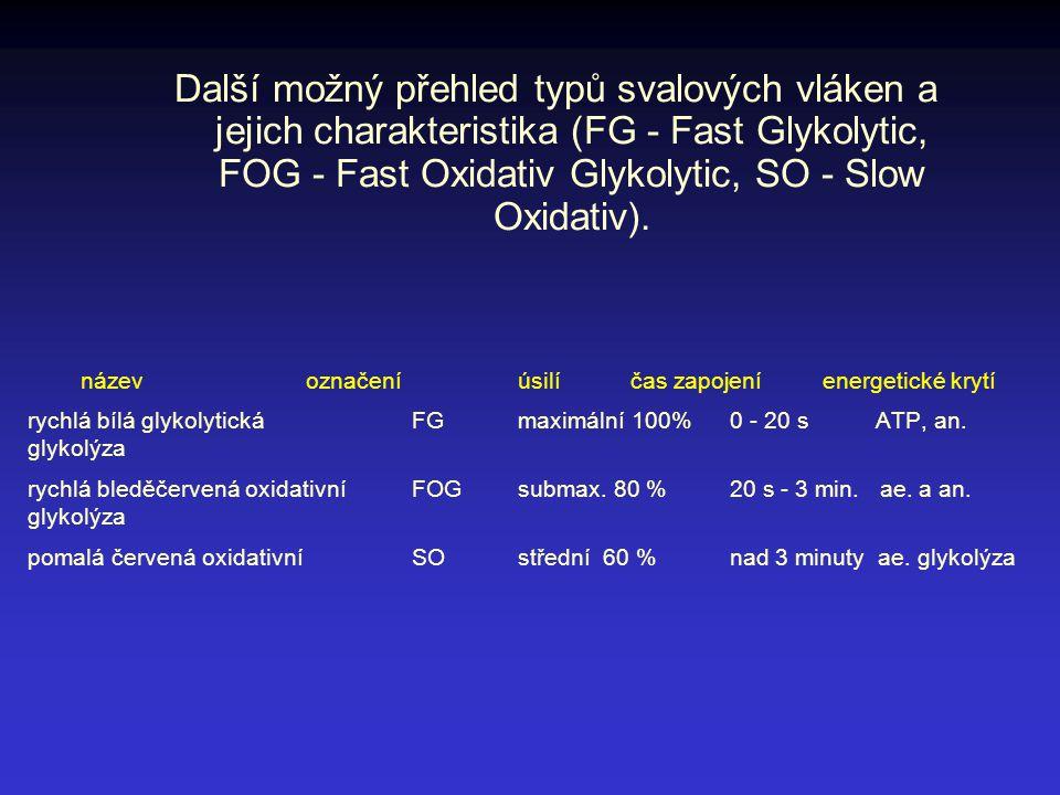 Další možný přehled typů svalových vláken a jejich charakteristika (FG - Fast Glykolytic, FOG - Fast Oxidativ Glykolytic, SO - Slow Oxidativ).