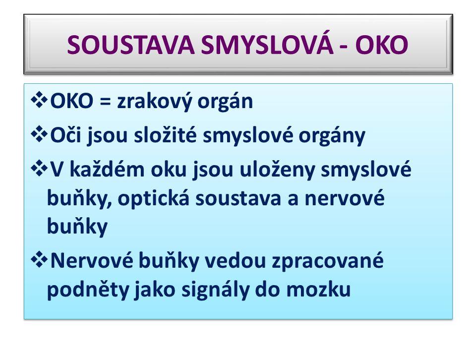 SOUSTAVA SMYSLOVÁ - OKO