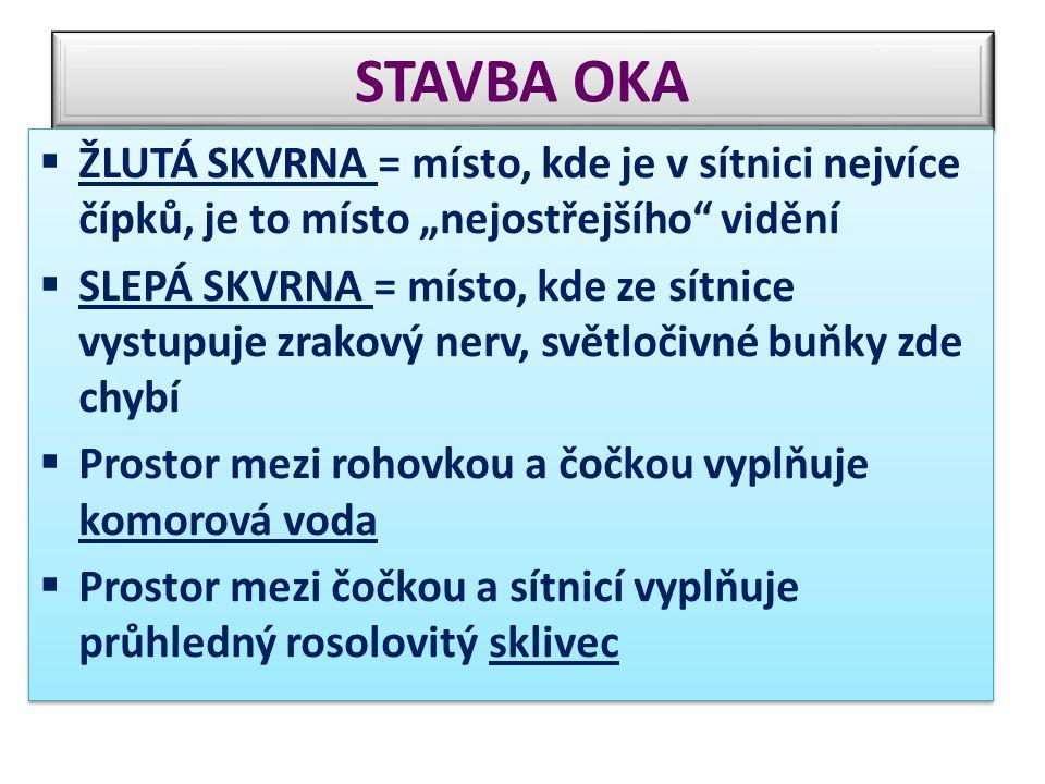 """STAVBA OKA ŽLUTÁ SKVRNA = místo, kde je v sítnici nejvíce čípků, je to místo """"nejostřejšího vidění."""