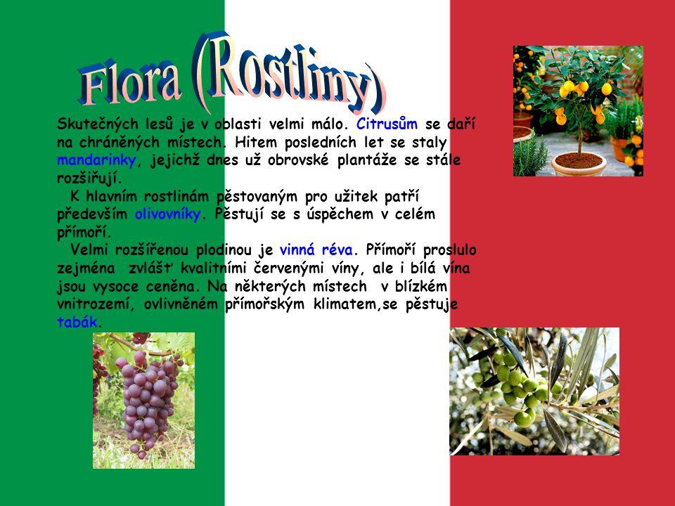 Flora (Rostliny)