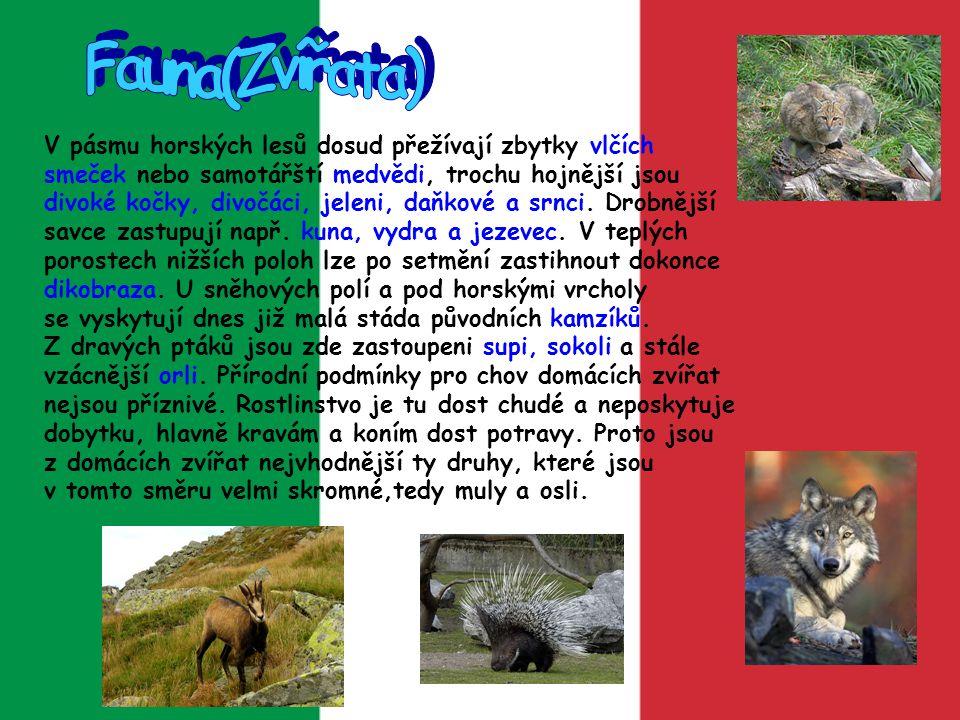 Fauna(Zvířata)