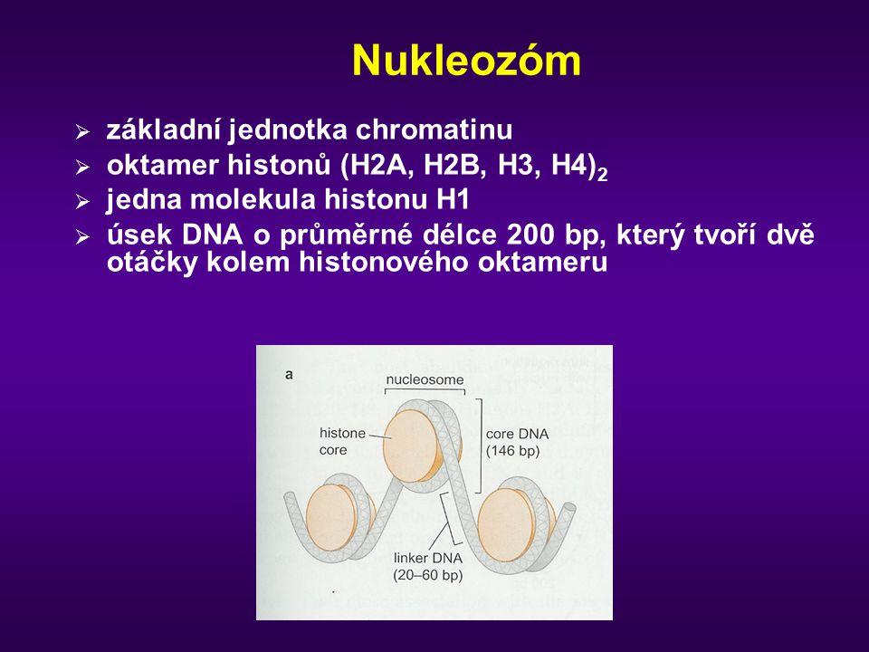 Nukleozóm základní jednotka chromatinu