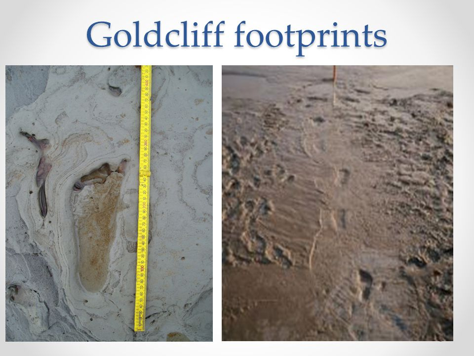 Goldcliff footprints