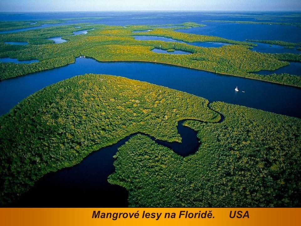 Mangrové lesy na Floridě. USA