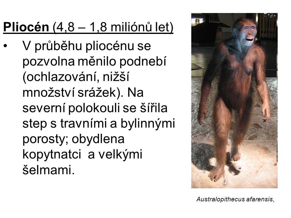 Pliocén (4,8 – 1,8 miliónů let)