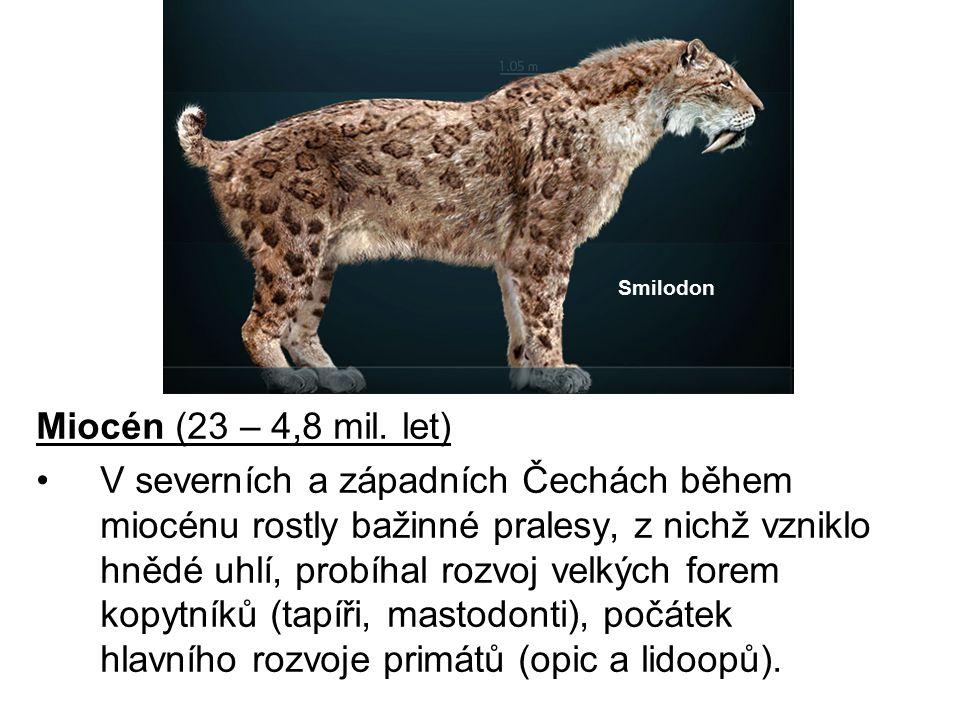 Smilodon Miocén (23 – 4,8 mil. let)