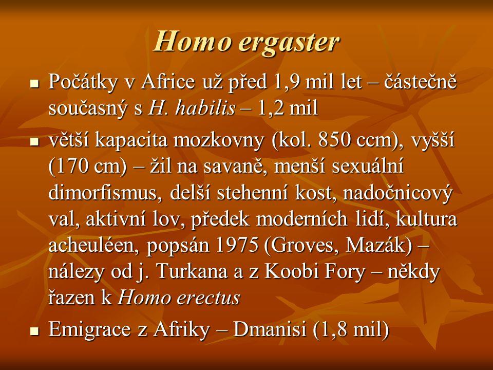 Homo ergaster Počátky v Africe už před 1,9 mil let – částečně současný s H. habilis – 1,2 mil.
