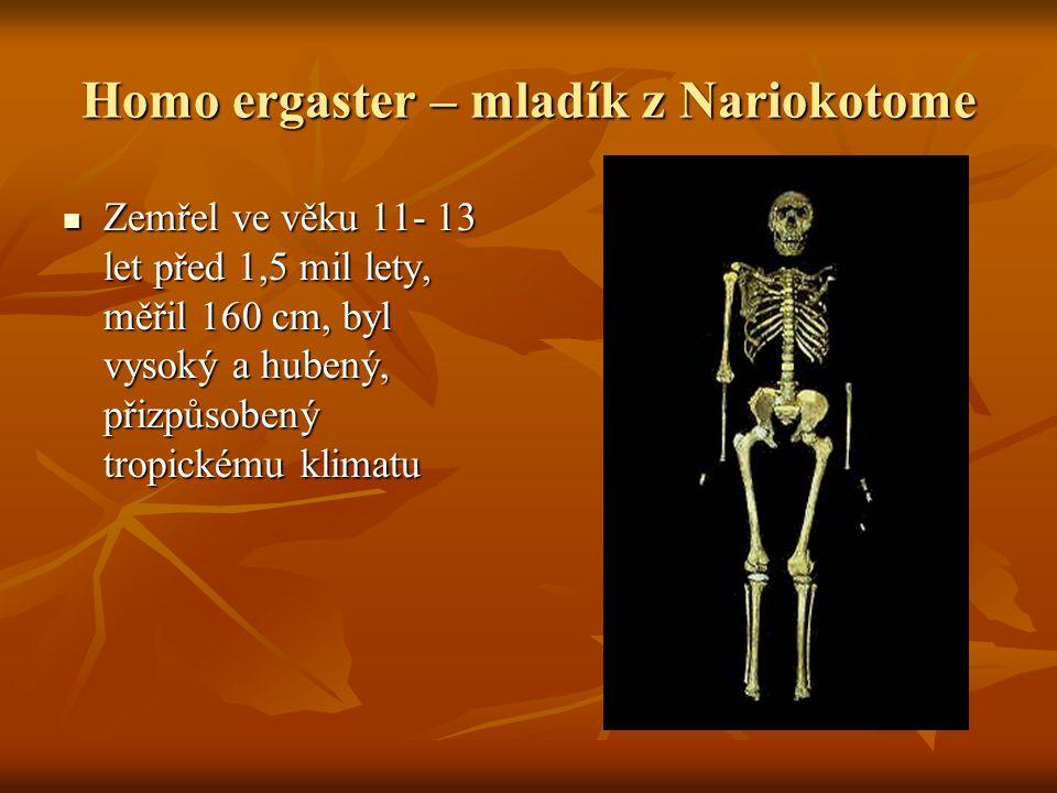 Homo ergaster – mladík z Nariokotome