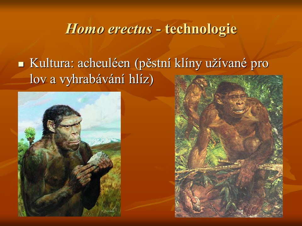 Homo erectus - technologie