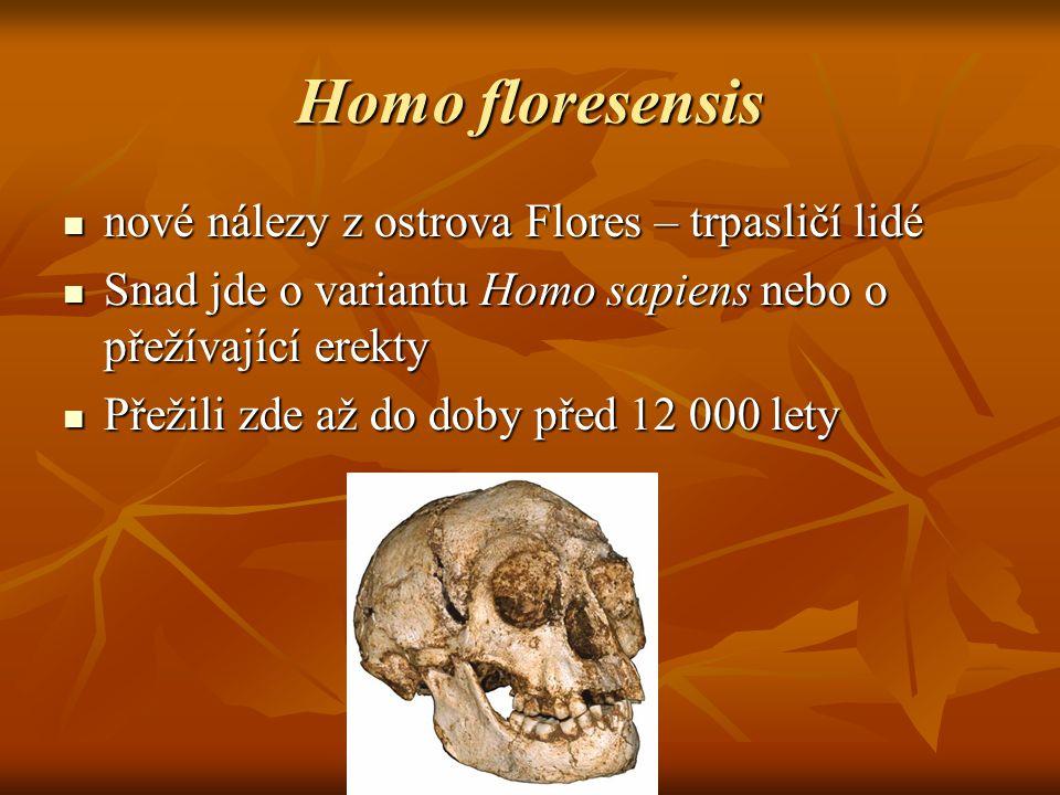 Homo floresensis nové nálezy z ostrova Flores – trpasličí lidé