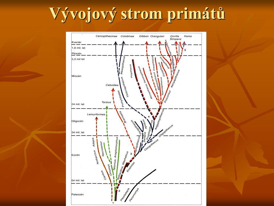 Vývojový strom primátů