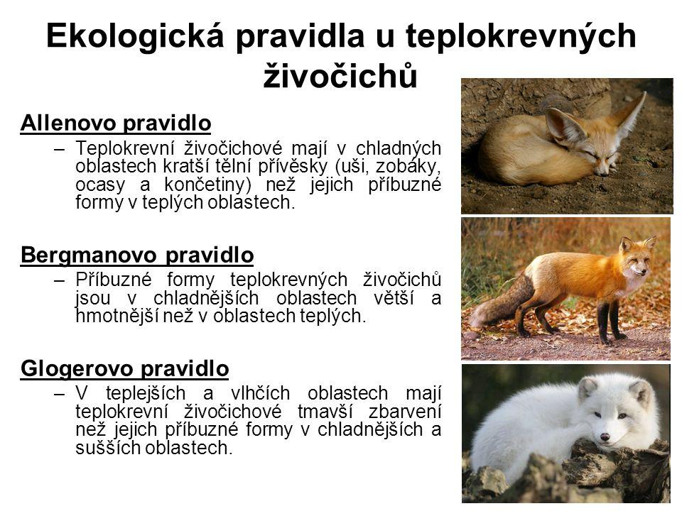 Ekologická pravidla u teplokrevných živočichů