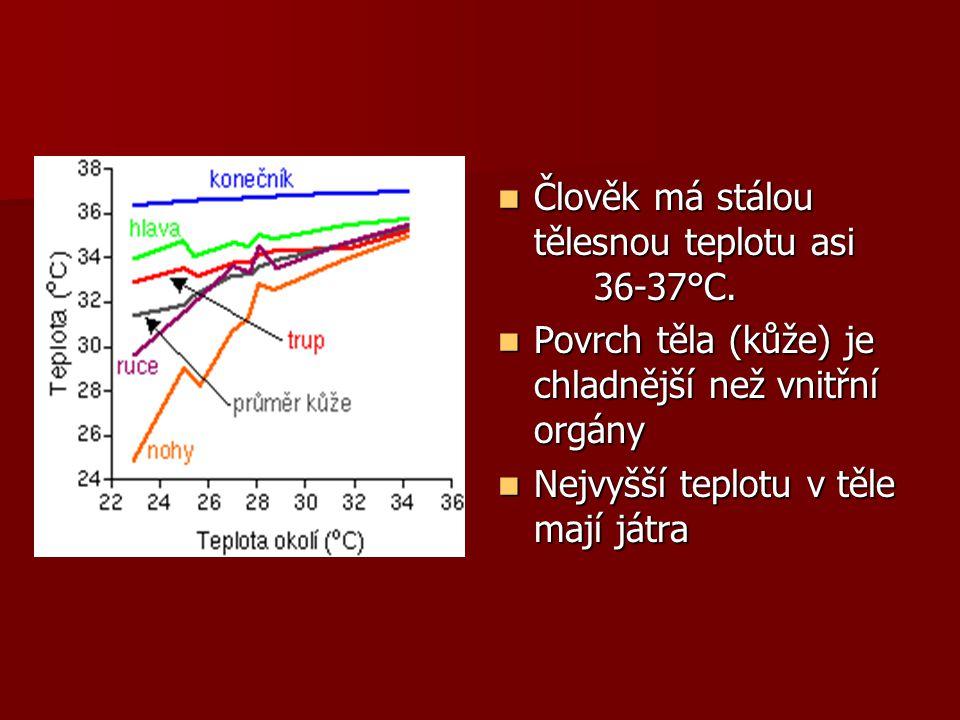 Člověk má stálou tělesnou teplotu asi 36-37°C.