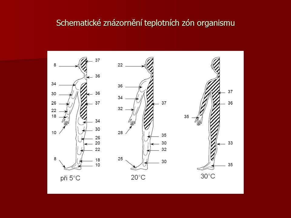 Schematické znázornění teplotních zón organismu