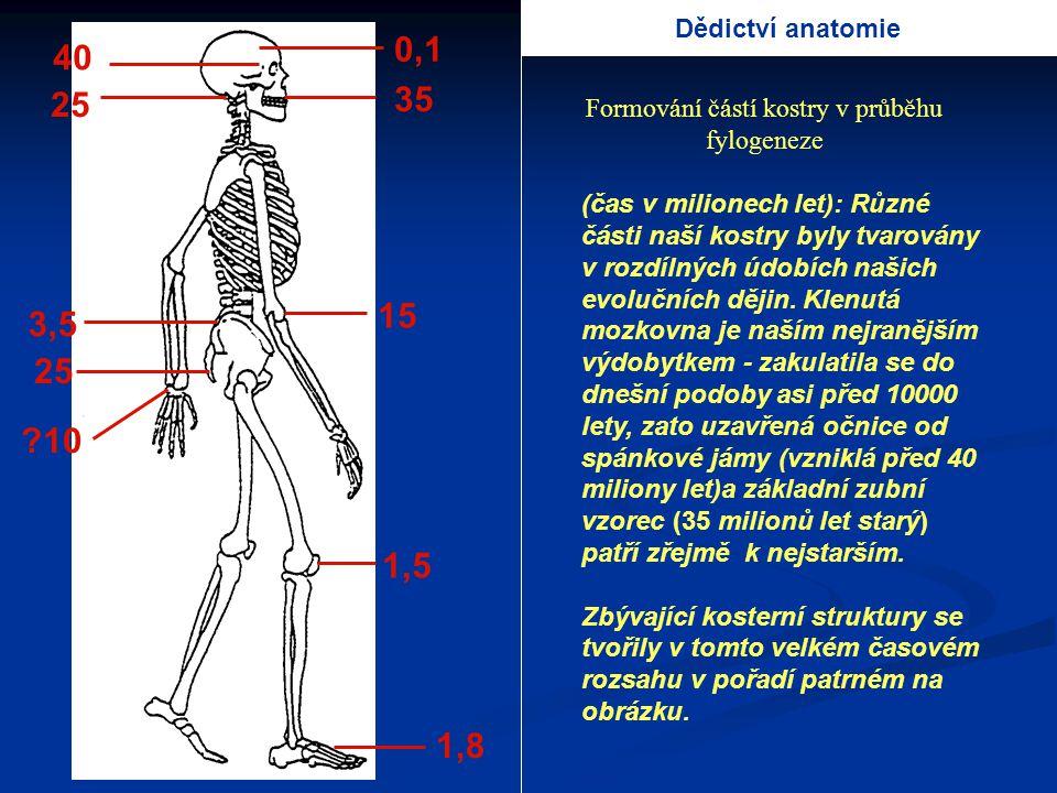 Formování částí kostry v průběhu fylogeneze