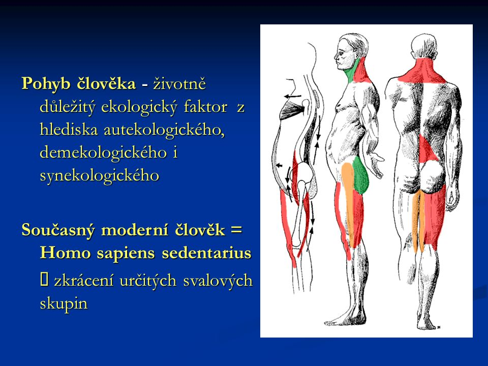 Pohyb člověka - životně důležitý ekologický faktor z hlediska autekologického, demekologického i synekologického
