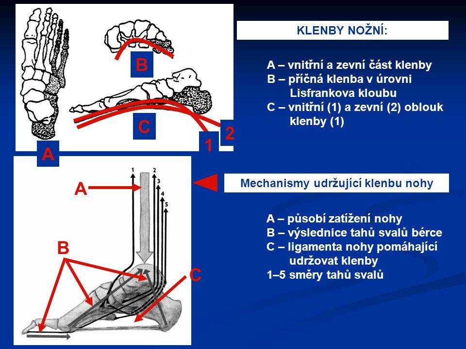 Mechanismy udržující klenbu nohy