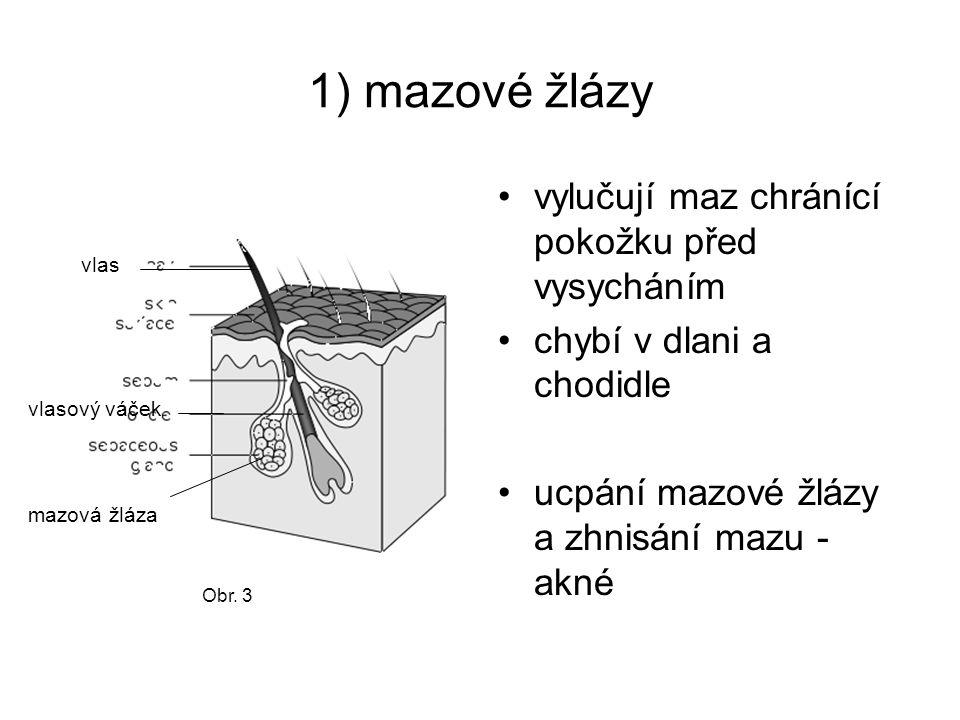 1) mazové žlázy vylučují maz chránící pokožku před vysycháním
