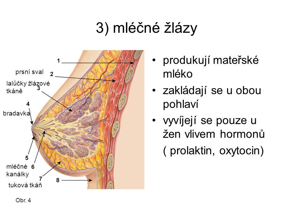 3) mléčné žlázy produkují mateřské mléko zakládají se u obou pohlaví