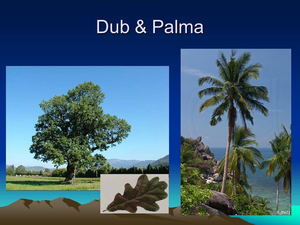 Dub & Palma