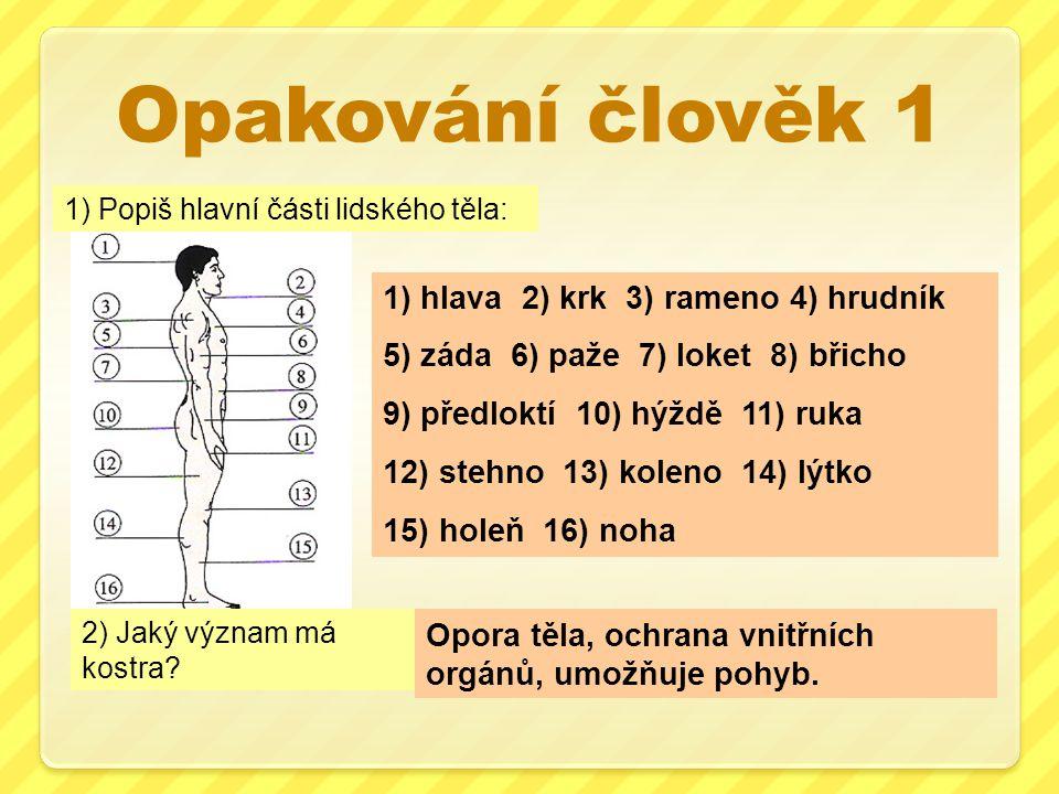 Opakování člověk 1 1) hlava 2) krk 3) rameno 4) hrudník