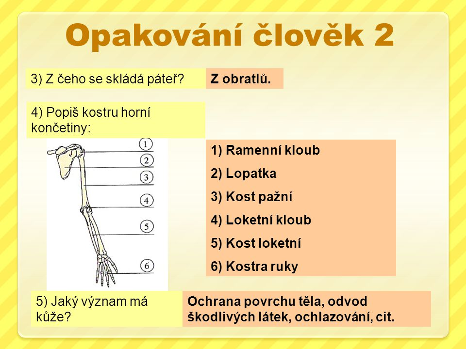 Opakování člověk 2 3) Z čeho se skládá páteř Z obratlů.