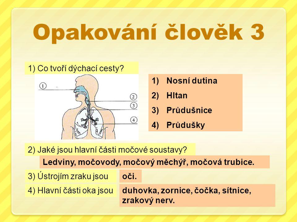 Opakování člověk 3 1) Co tvoří dýchací cesty Nosní dutina Hltan